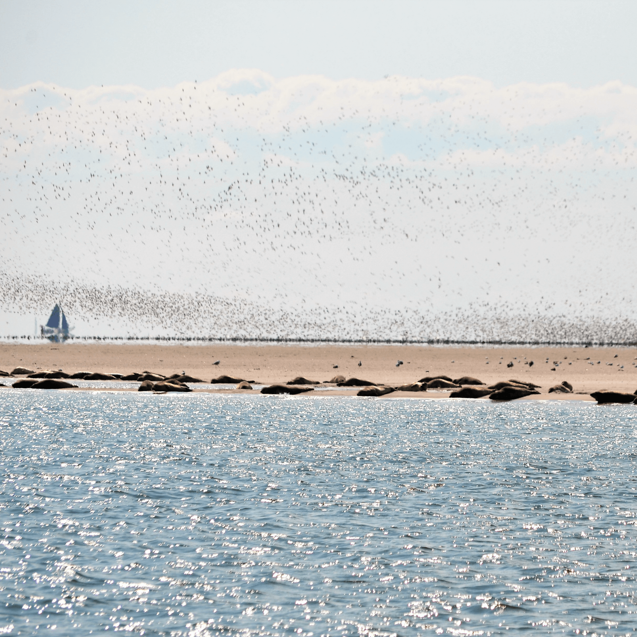 180610_About_Waddenzee