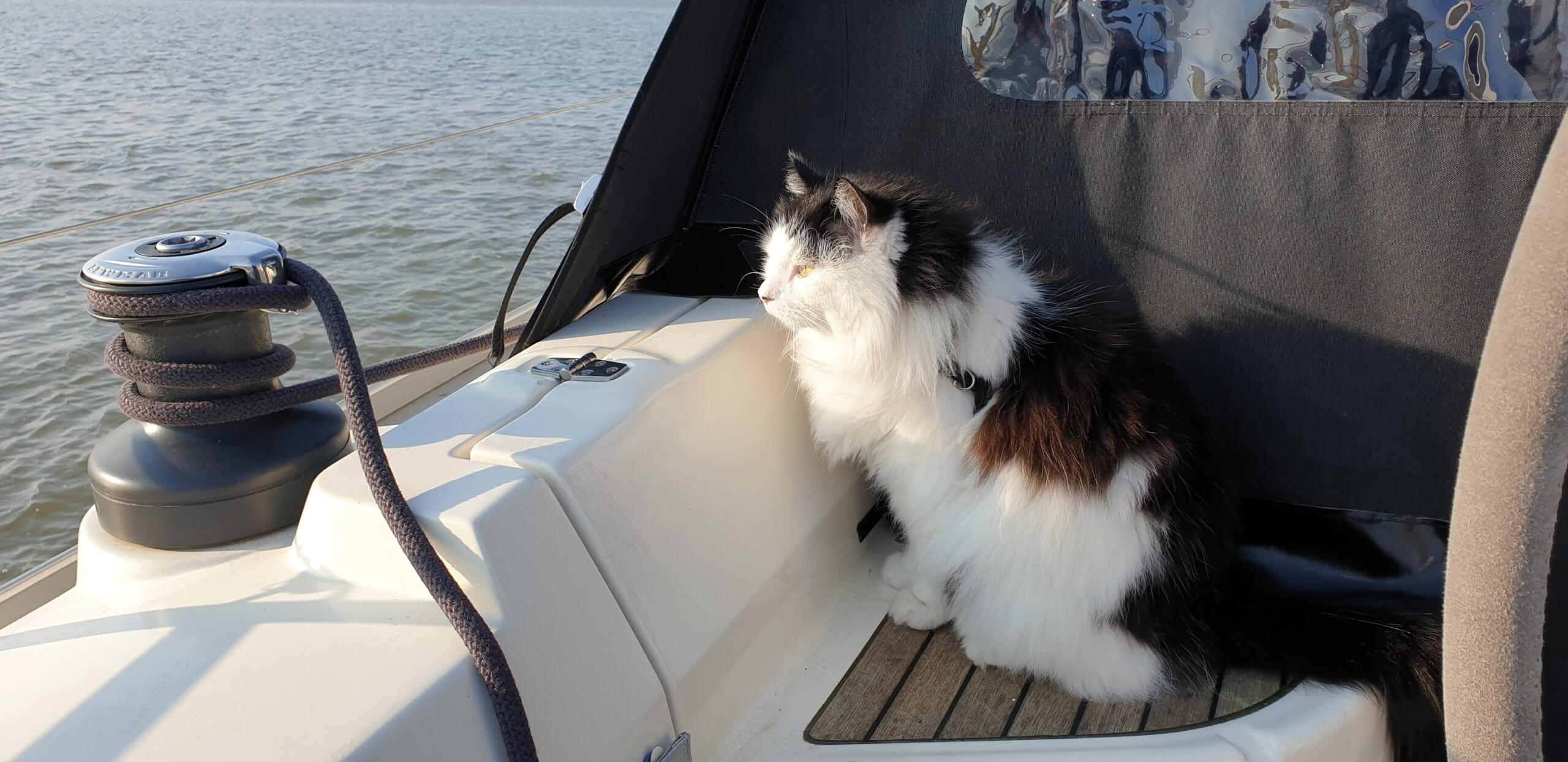 Bolle cat the sailor